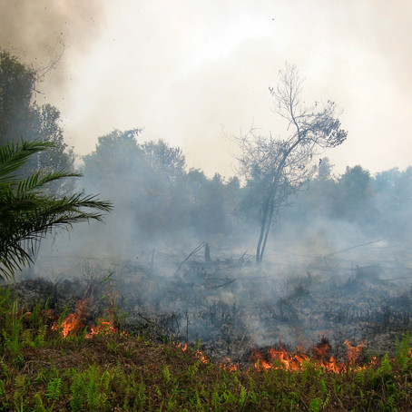 Fires and COVID-19: A Disaster Duo in Indonesia