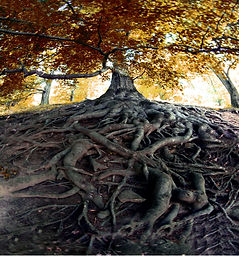 trees with thick roots.jpg