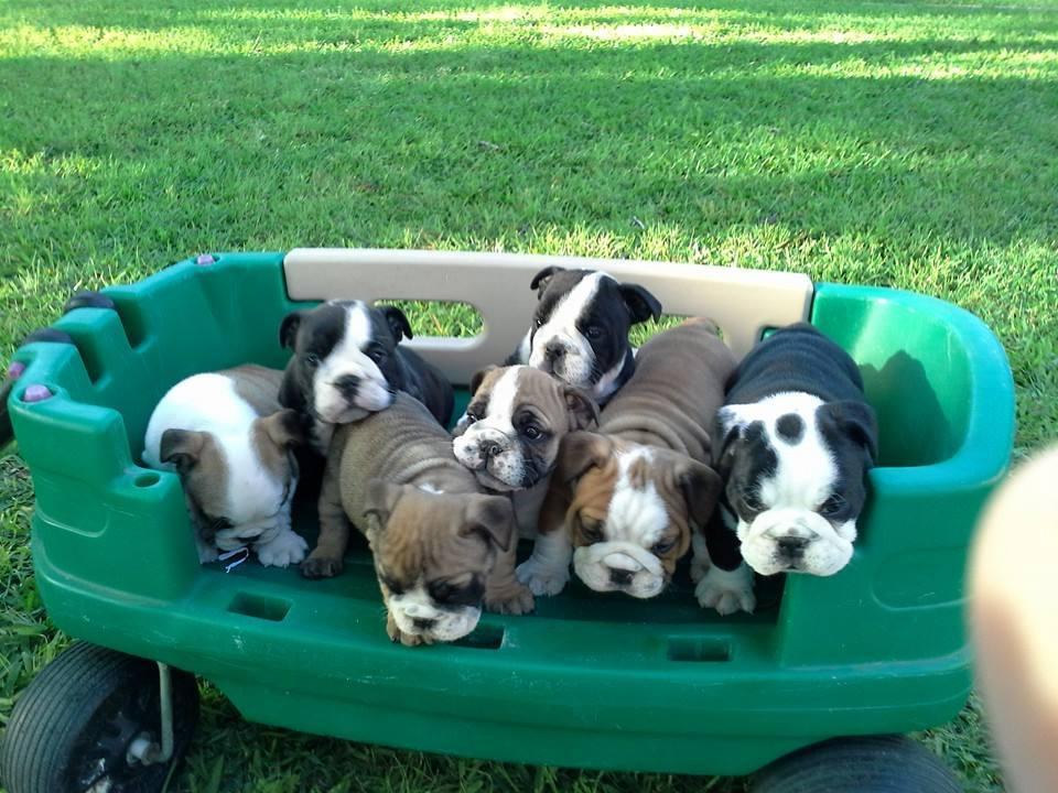Past Puppies.jpg