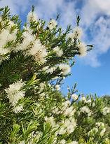 EOT SRosalina flower_4161.jpg