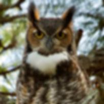 owl-15.jpg