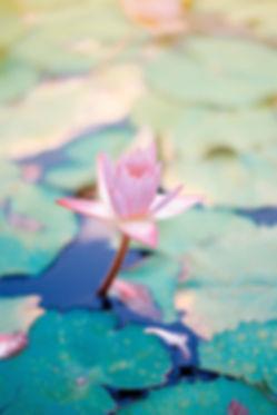 lotus_600x.jpg