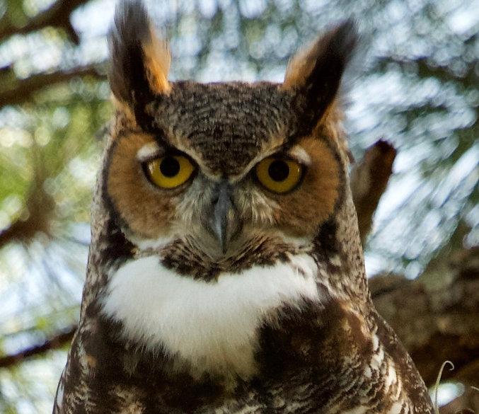 owl2_edited_edited_edited.jpg
