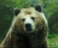 bear-15.jpg