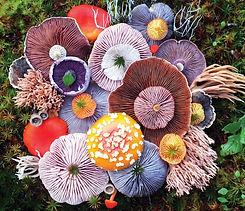 nature-medleys-mushrooms-jill-bliss-1.jp