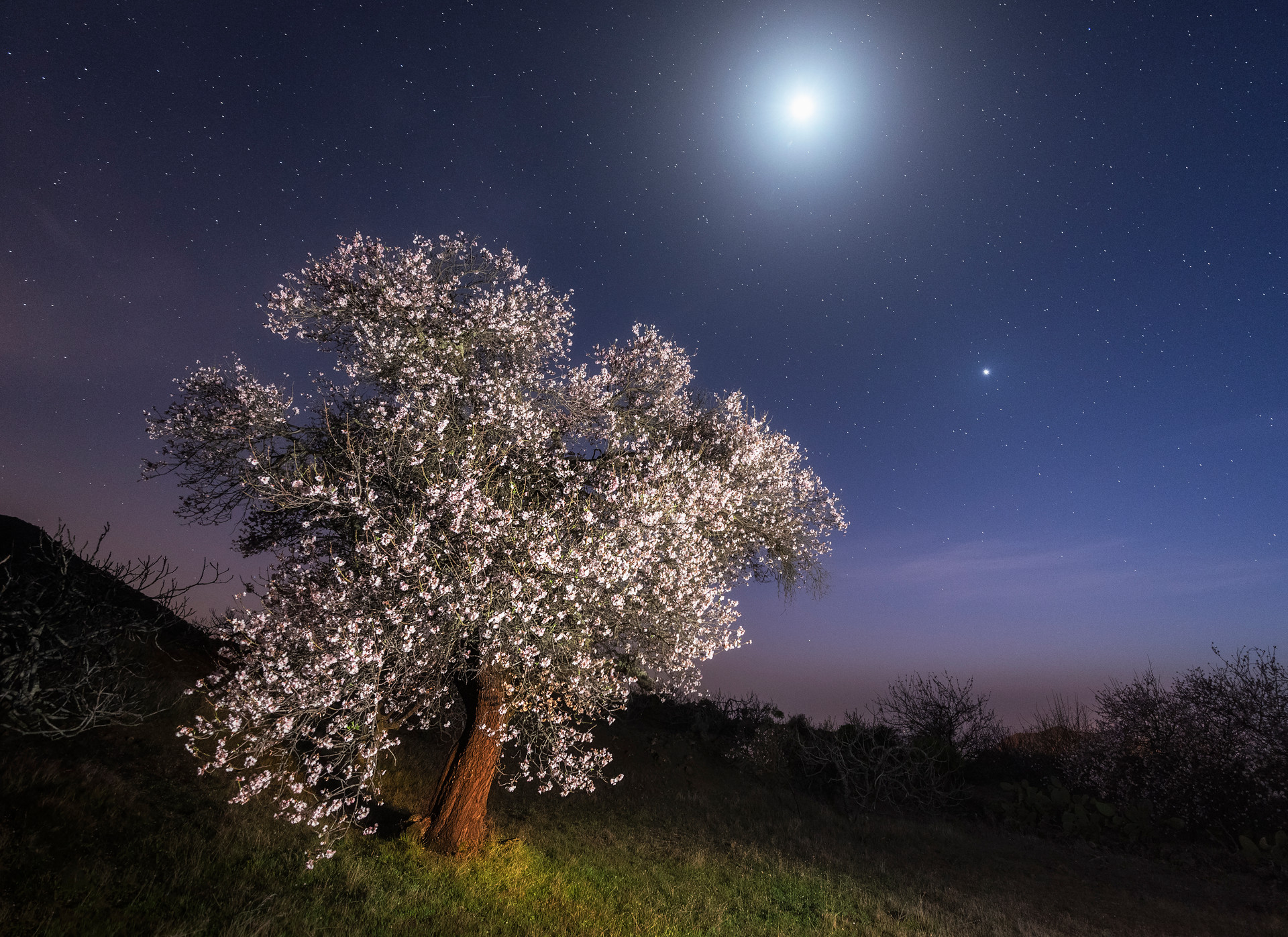 Moonlight (Valle de Arriba).jpg