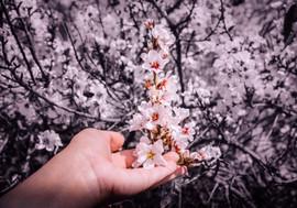 eterna primavera