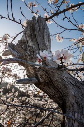 tronco florido.jpg