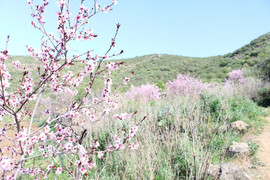 La vie en rose. Valle de Arriba.JPG