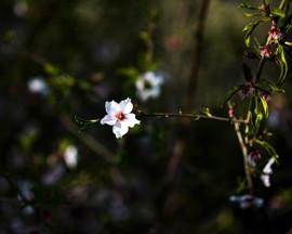 Rama con flor