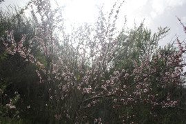 Luz rosada (Valle de Arriba) (2).JPG