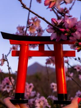 La_esencia_de_Japón_en_Santiago_del_Teid