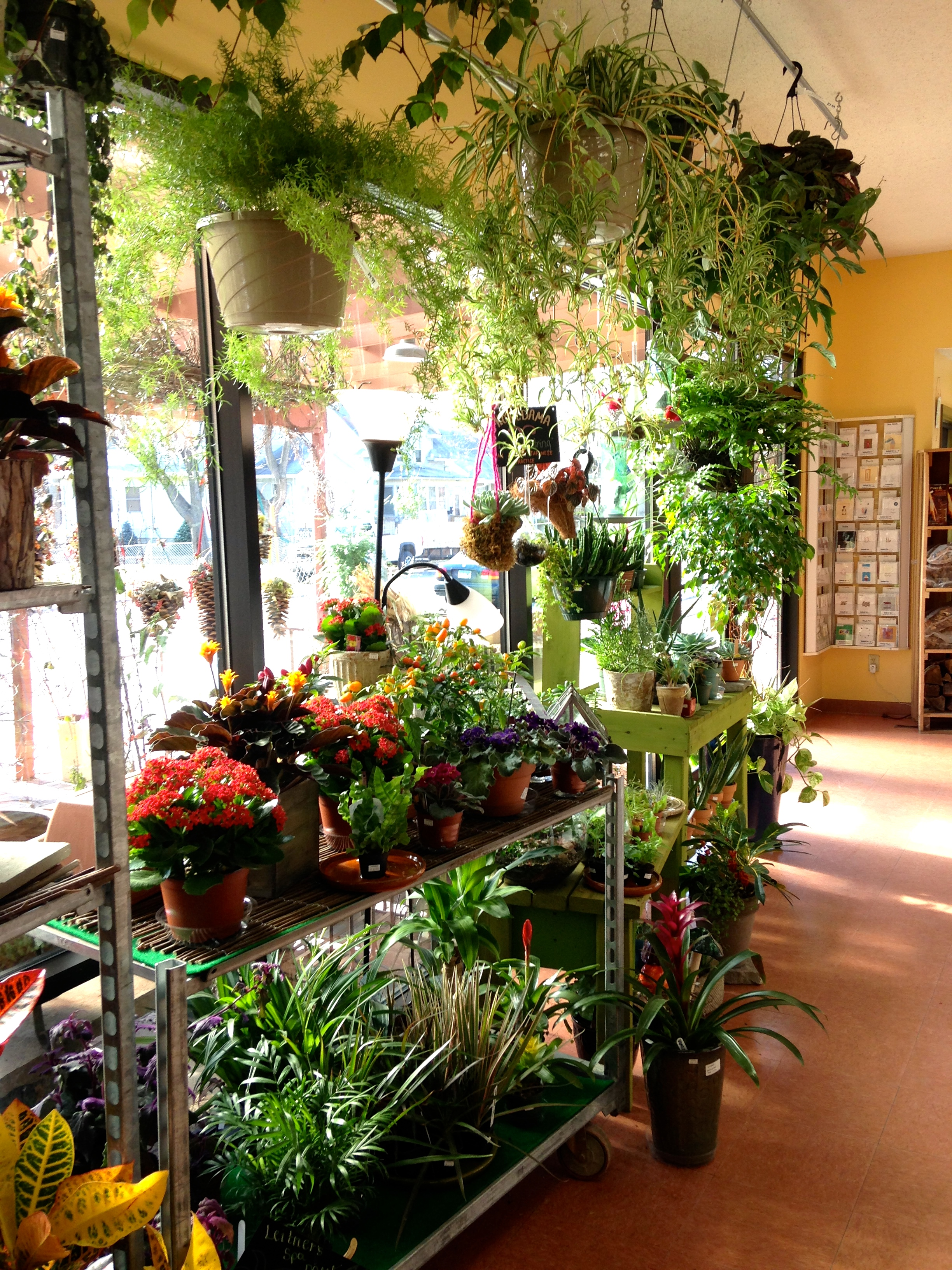 Check out our Houseplant Section!