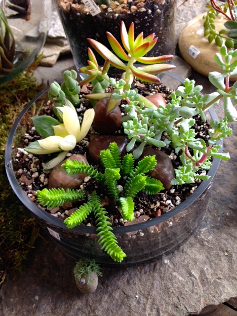 Create a Succulent Garden