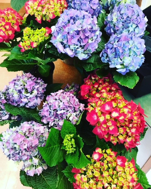 Floral Hydrangeas
