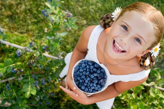 Blueberry Season Begins!