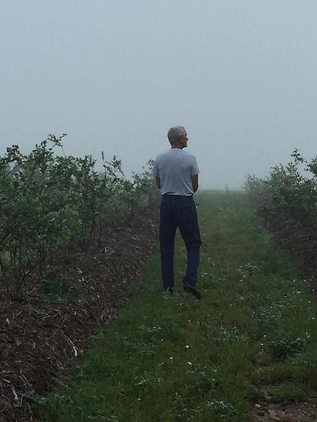 Tom Blueberries.jpg