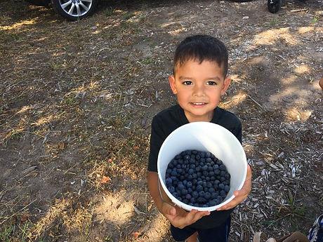 Blueberry Bucket.jpg