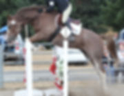 Stadium Jump Rounds - double clear!