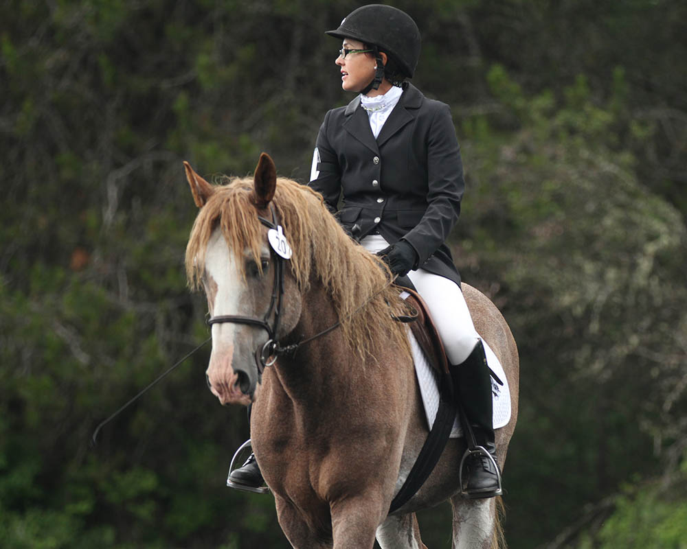 Before dressage Traveler 142-D