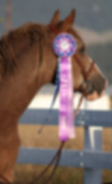 Winning the 2013 Horse of the Year award