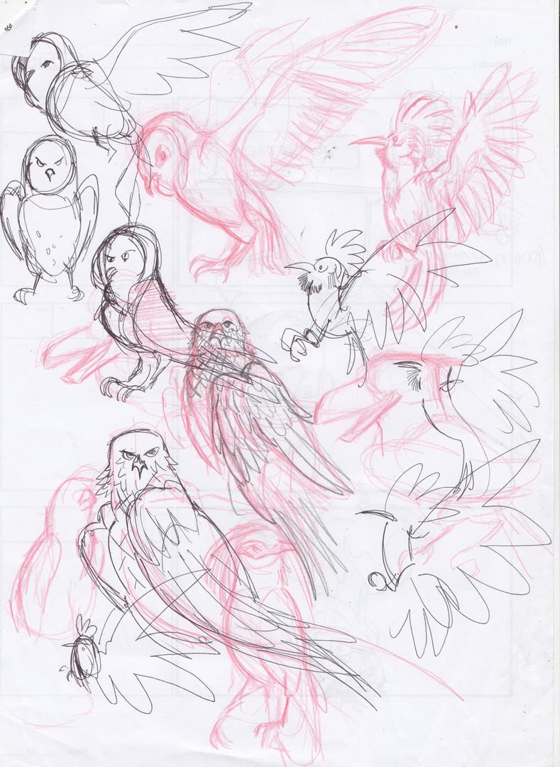 birdstudies