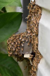 Swarm removal overflow