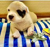 LANI - 2M Terrier girl.jpg