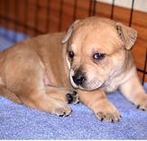 KAUAI - 2M Terrier boy.png