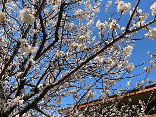 Let's enjoy Springtime!