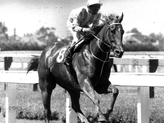 Champion racehorse, Manikato