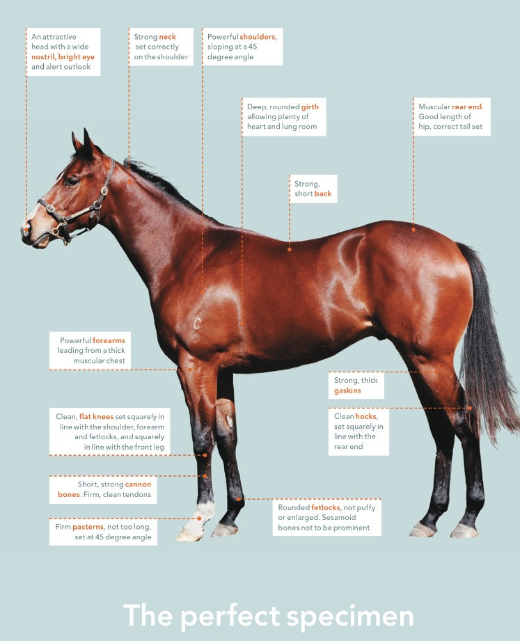 *The Thoroughbred Magazine 2008, 'How to pick a Yearling', Power, Danny.