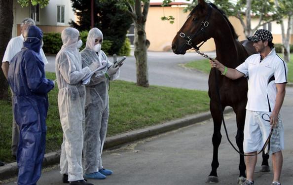 Equine Influenza - 10 Years On