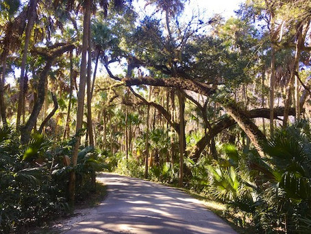 02/20/2020 - Central Florida's Nature Oasis