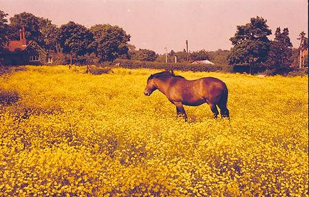 horseatbroadacre.jpg