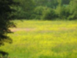 FieldBroadacreAug2013 (600 x 450) (FILEm