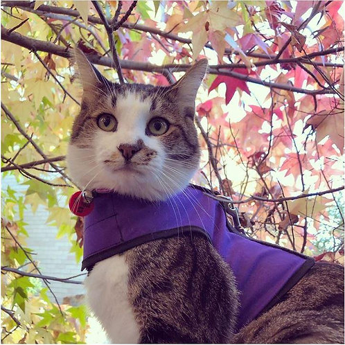 Kitty Holster Cat Harness (Purple)