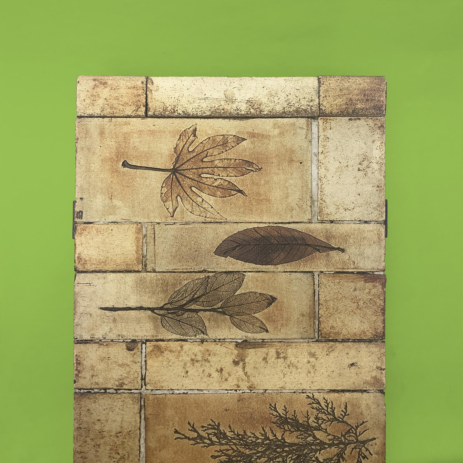 herbier table Roger Capron