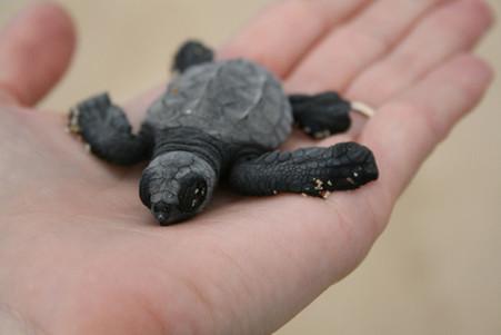 Celebrating the Turtle Season in Baja California Sur