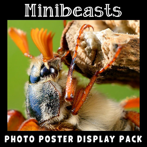 Minibeasts Photo Posters Display Pack