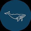 Whale Partner