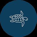 Turtle partner