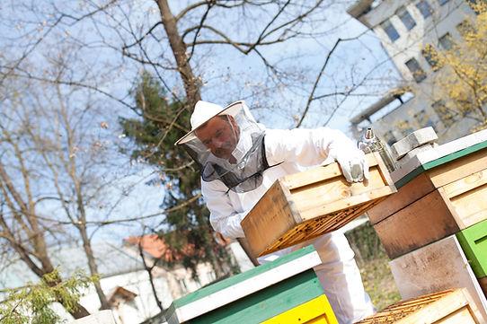 City Imker Klagenfurt - Bienen-Völker im ORF Garten