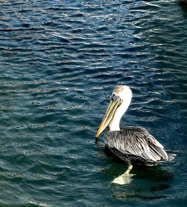 Dockside Visitor