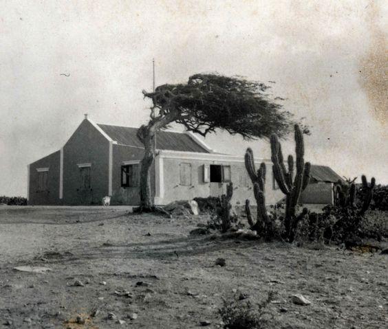 Aruba Cunuco