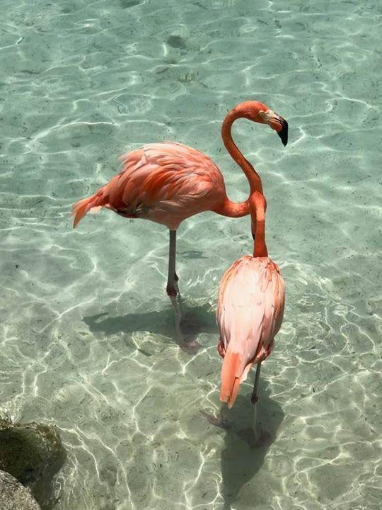 Bon Dia from Aruba!