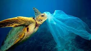 Sea Turtle with plastic bag Unknown photographer