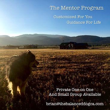 mentor.jpeg
