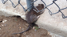 Don't Let Rodents Get Away With It
