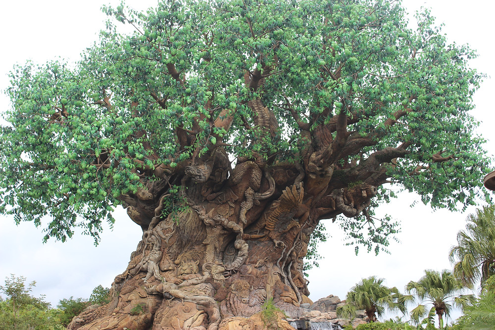 Animal Kingdom Tree of Life by Destination Families